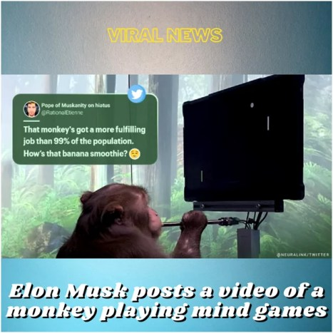 , Elon Musk posts a video of a monkey playing mind games.