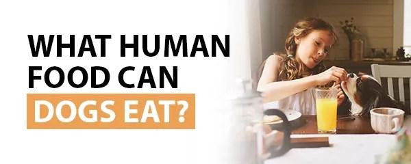 , Can Dog Eat Human Food?