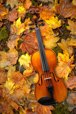 Violin Lying on Red and Orange Autumn Leaves Background