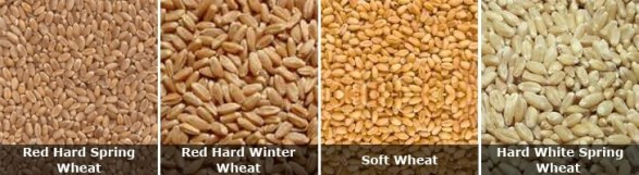 Hard grains/ Soft grains