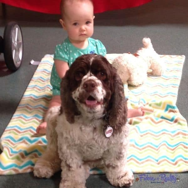 baby sitting with cocker spaniel