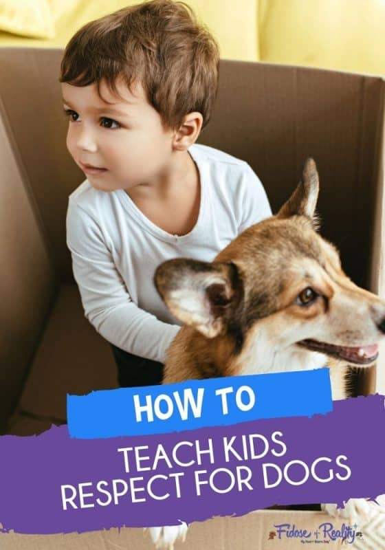 How to teach kids respect for dogs