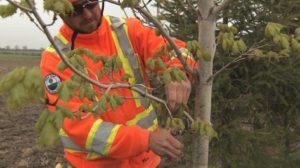 FINAL Pruning image (2)