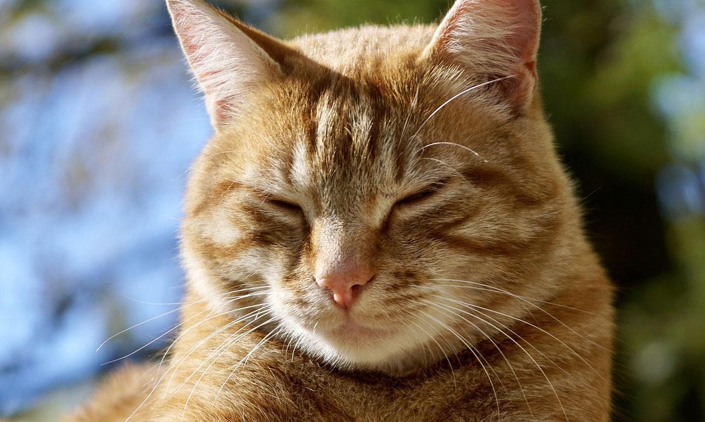 Garfield – The Handicat