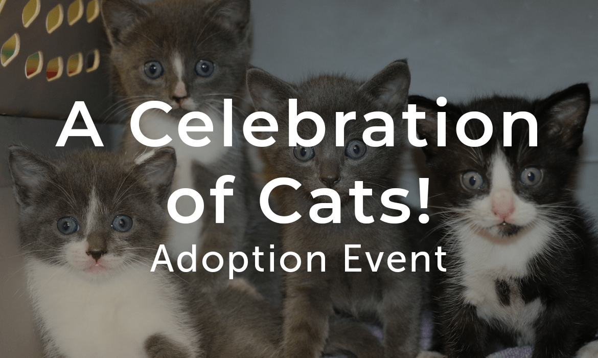 A Celebration of Cats! Adoption Event