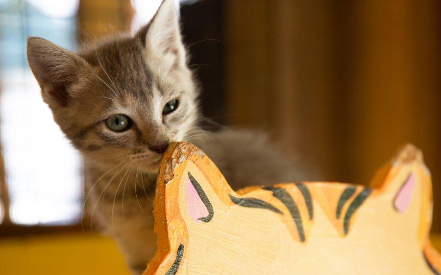 A small tabby kitten behind a wooden orange cat.