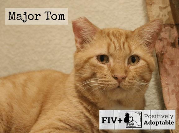 fiv-major-tom_600x445