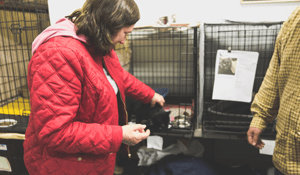 Makeshift Emergency Shelter Cares for Cats Amid the No. California Wildfire