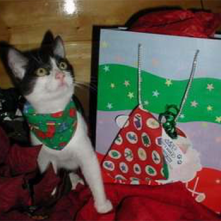 A black and white cat wearing a bandana and standing beside a bagged gift as part of the Home 4 the Holidays Campaign