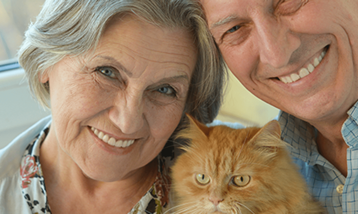 Mature Cats for Mature People
