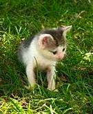 We need foster parents for the kittens too young for adoption.