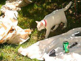 Feline staff member Blanca supervised the job from start to finish.