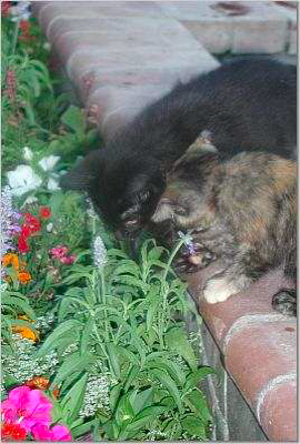 newsletter-spring-2006-play-time-3_270x400
