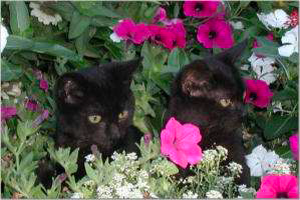 newsletter-spring-2006-snap-2_300x200