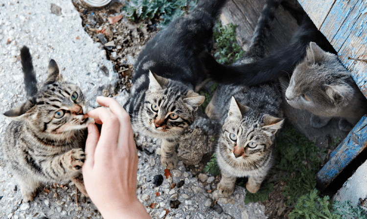 These Cats are Hungry
