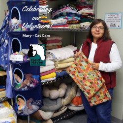 FieldHaven Volunteer Mary taking care of putting blankets away