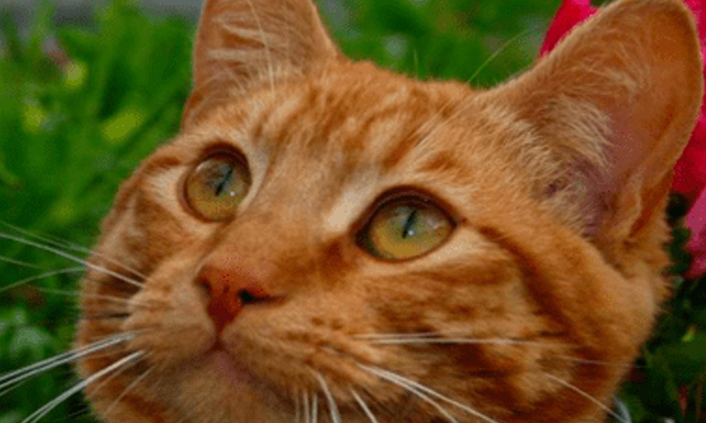 Garfield's Story: 2004 – 2005