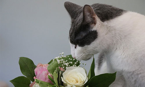 Champy sniffing some roses