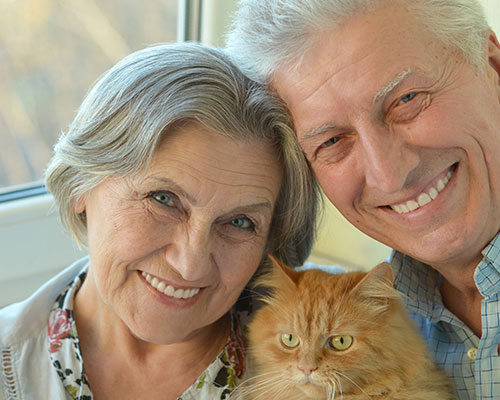 An elderly couple with an adoptable mature cat.