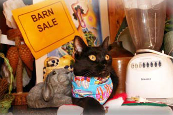 A black cat with a bandana promoting the barn sale