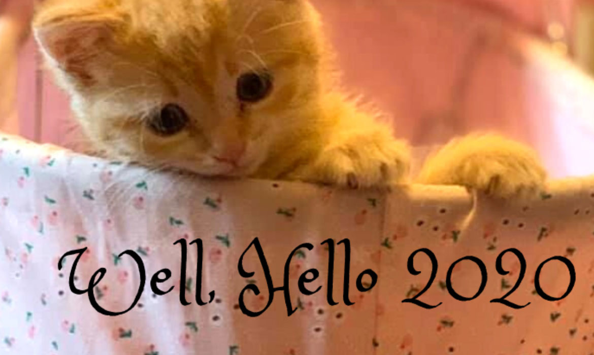 Happy New Year from FieldHaven Feline Center
