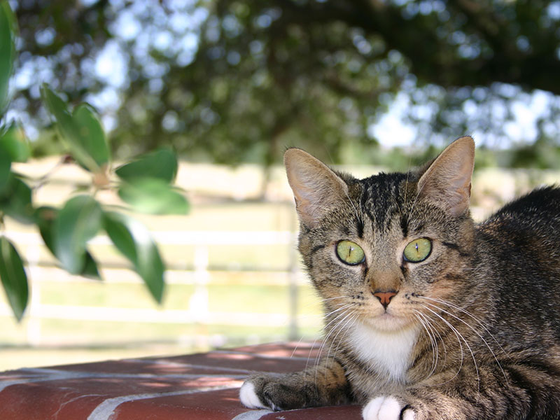 A tabby cat rescued from the Regency Park project.