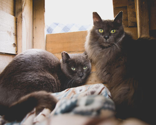 Two grey cats in a barn.