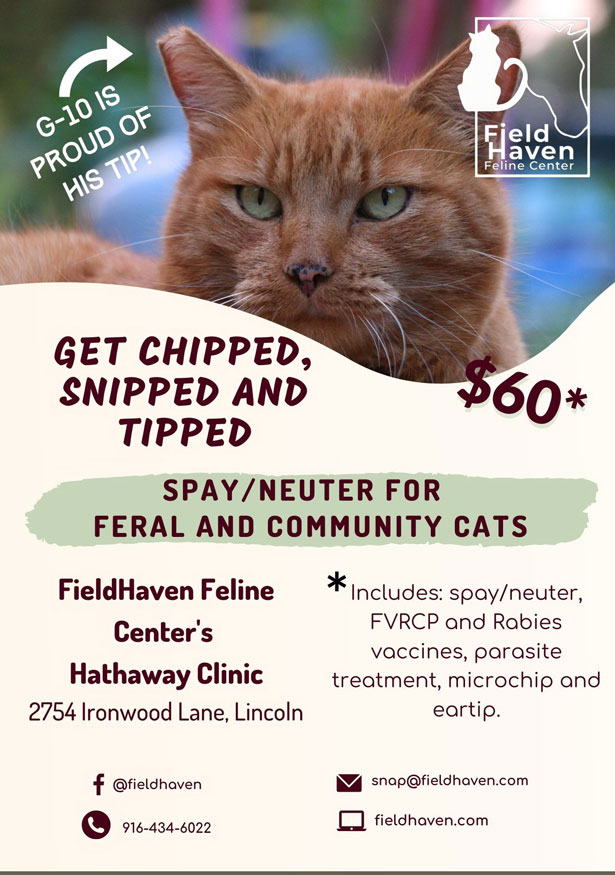 $60 Spay and Neuter for Feral Community Cats