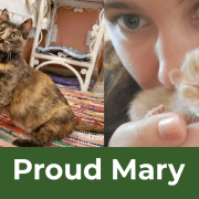 12 Saves of Christmas – Proud Mary – FieldHaven's Heartwarming Save #11