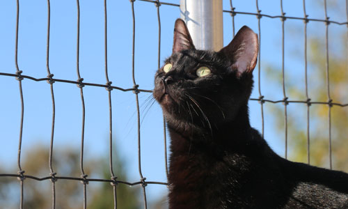 A barn cat awaiting adoption through FieldHaven's 2nd Chance Ranch