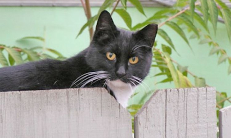 FieldHaven Update: Scruffy Kittens Transformed, 2021 Stretch Goal!