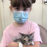 Flood of Kittens, Flood of Adoptions