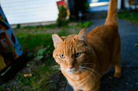 Gunner, my neighbors cat who comes to visit regularly. @4-70/ƒ4 at 35mm ƒ4 SS1/640 at ISO 3200.