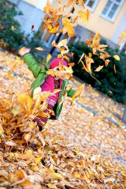 leaves explosion