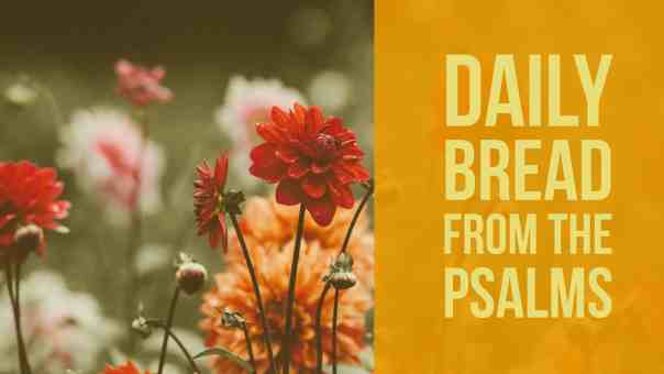 Daily Bread:  Thoughts and Prayers from the Book of Psalms Psalm 8