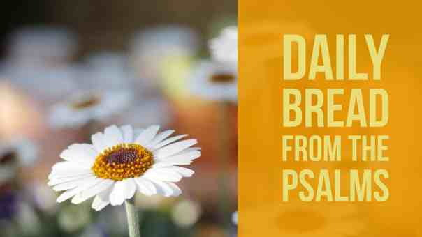 Psalm 11, Praying the Psalms (Fields of Daisies)