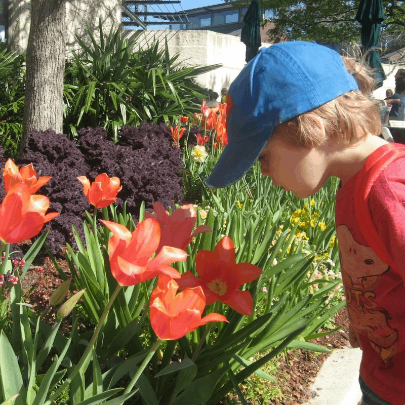 dallas-arboretum