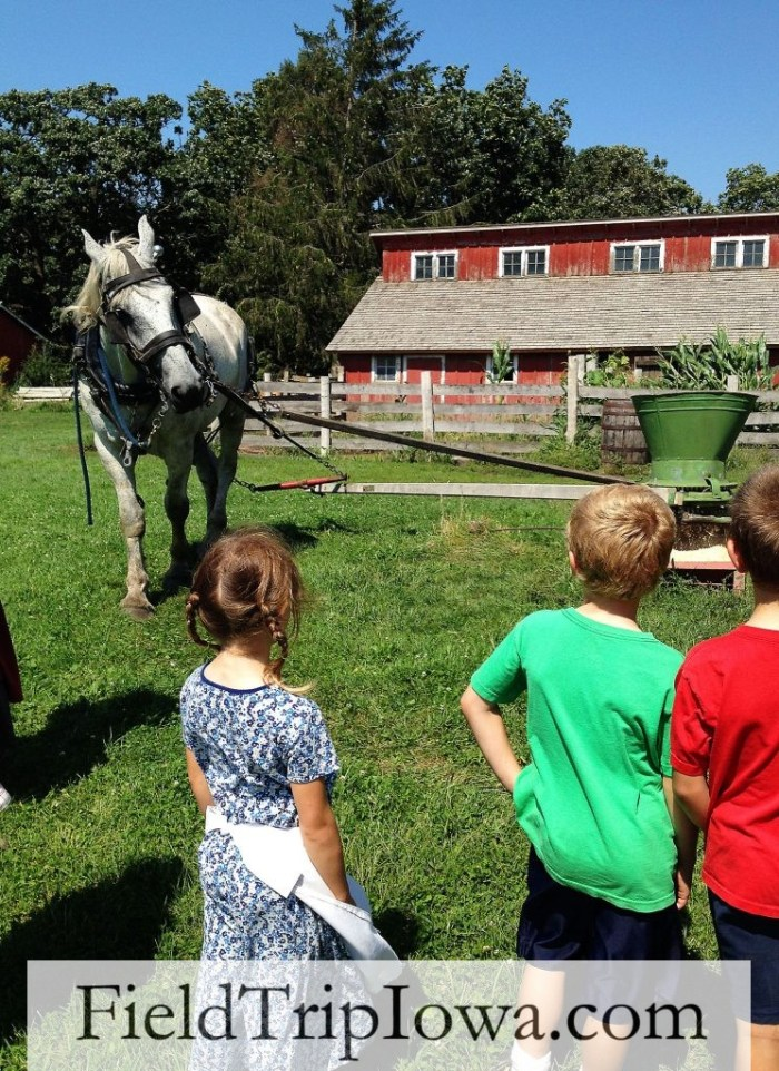 Living History Farms Horse grinding feed