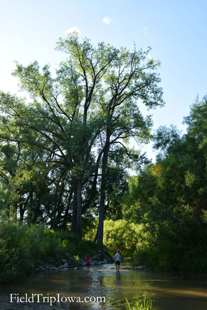 Ledges State Park old tree