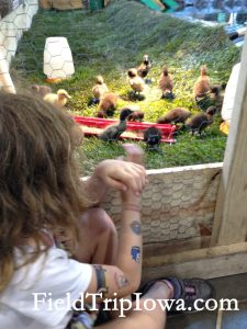 Iowa State Fair Paul R. Knapp Animal Learning Center baby ducks