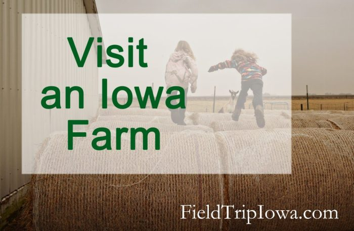 Girls have fun jumping on hay bales on a visit to an Iowa Farm.