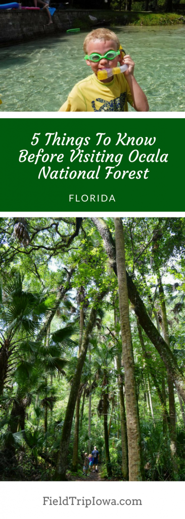 5 Things To Know Before Visiting Ocala National Forest