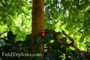 Two Macaws snuggle together in tropical trees at Discovery Cove Florida