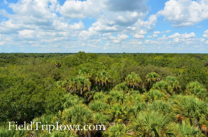 Breath taking views from the top of the tower at Myakka River State Park in Florida.