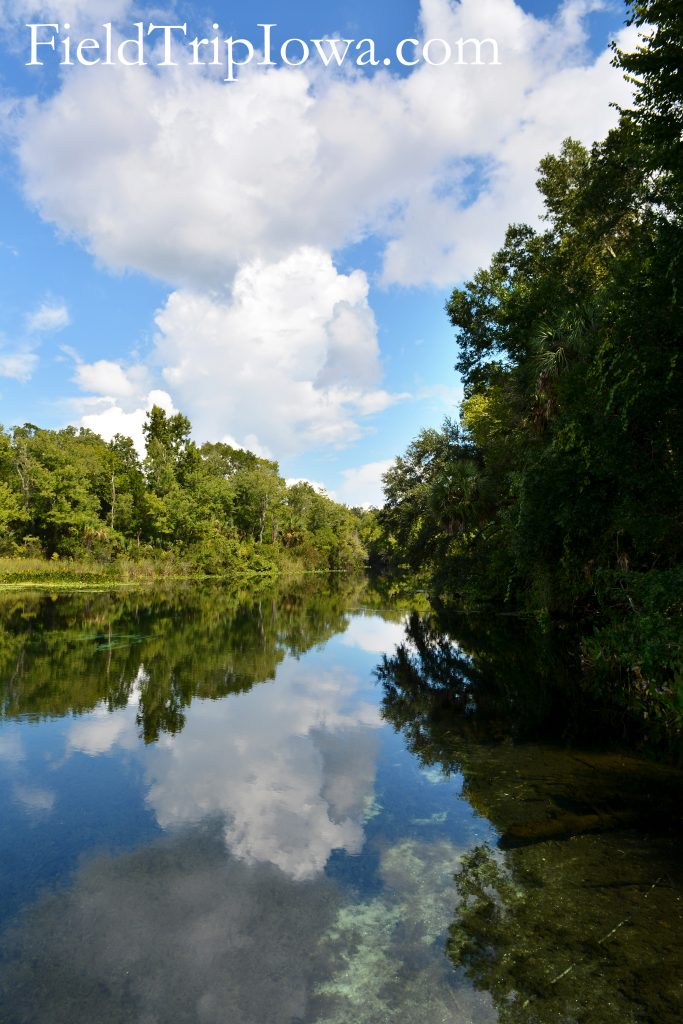 Reflection of trees and sky in water at Ocala National Forest Alexander Springs Timucuan Indian Nature Trail