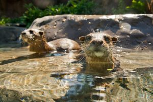 Cute animals! Read more of our Family Review of Discovery Cove Florida