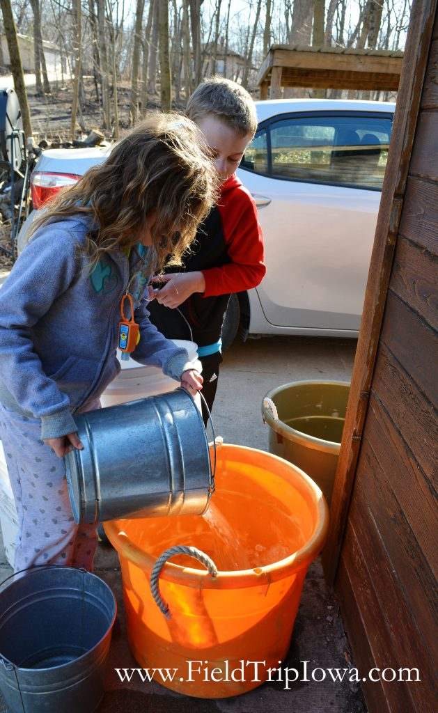 Girl dumping maple sap into collection bucket at Hartmand Reserve Nature Center in Cedar Falls Iowa.
