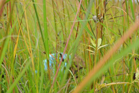 hide-and-seek in the prairie