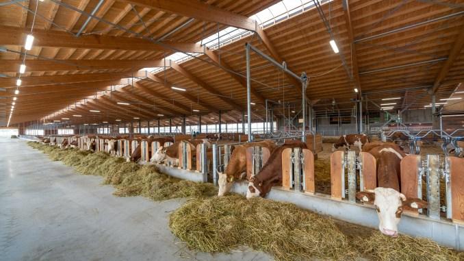 Fiere Zootecniche di Cremona