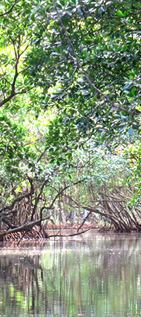 thumbnail of Mangrove image for novel The Yoga of Sailing